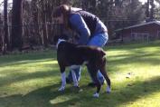 Cane salvato dall' addestratore dopo un infarto. Emozione incredibile