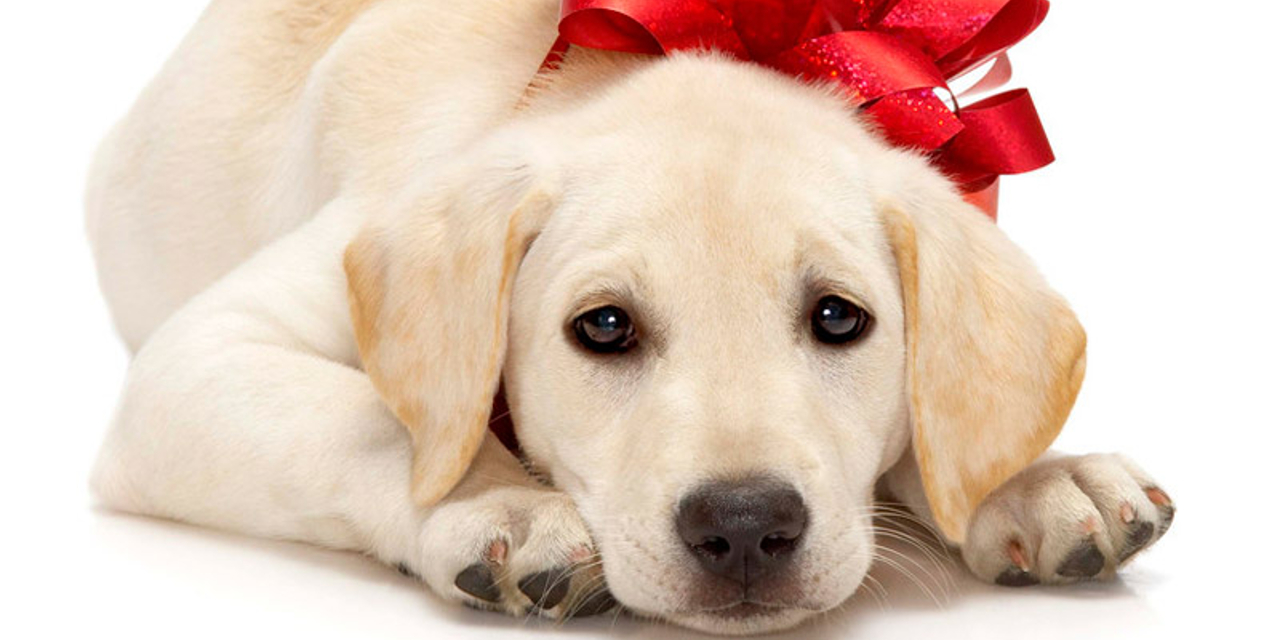 Uno Speciale Regalo Di Natale La Moglie Piange Dallemozione La