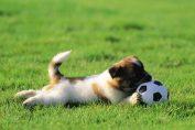 cane che gioca a pallone in sipaggia
