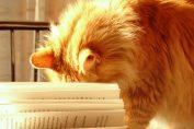 gatti antistress in scuola per esame di maturità
