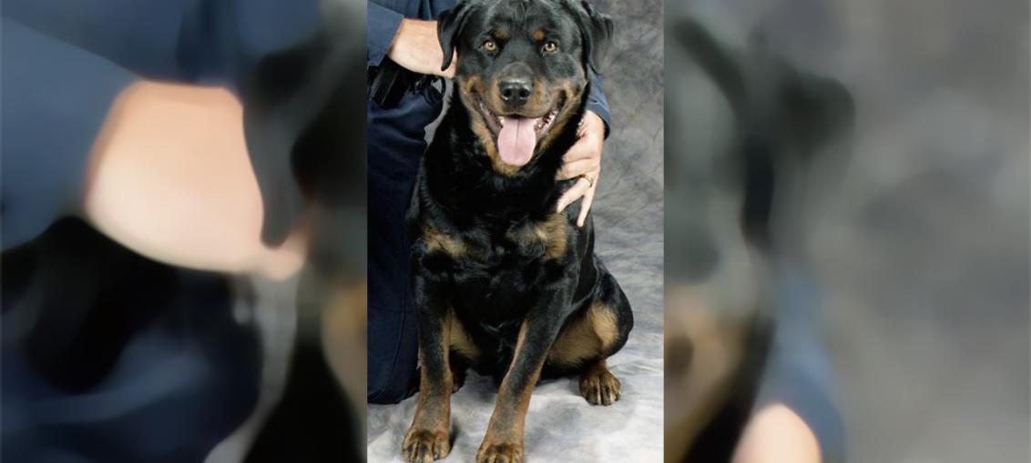 la storia di caesar cane poliziotto