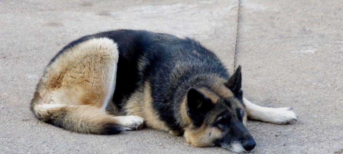 normativa legge cani tenuti alla catena