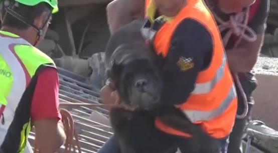 cane salvato dalle macerie del terremoto di amatrice