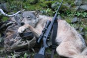 aperta la caccia ai lupi
