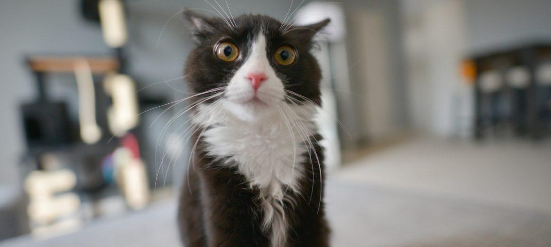 dieci curiosità sui gatti