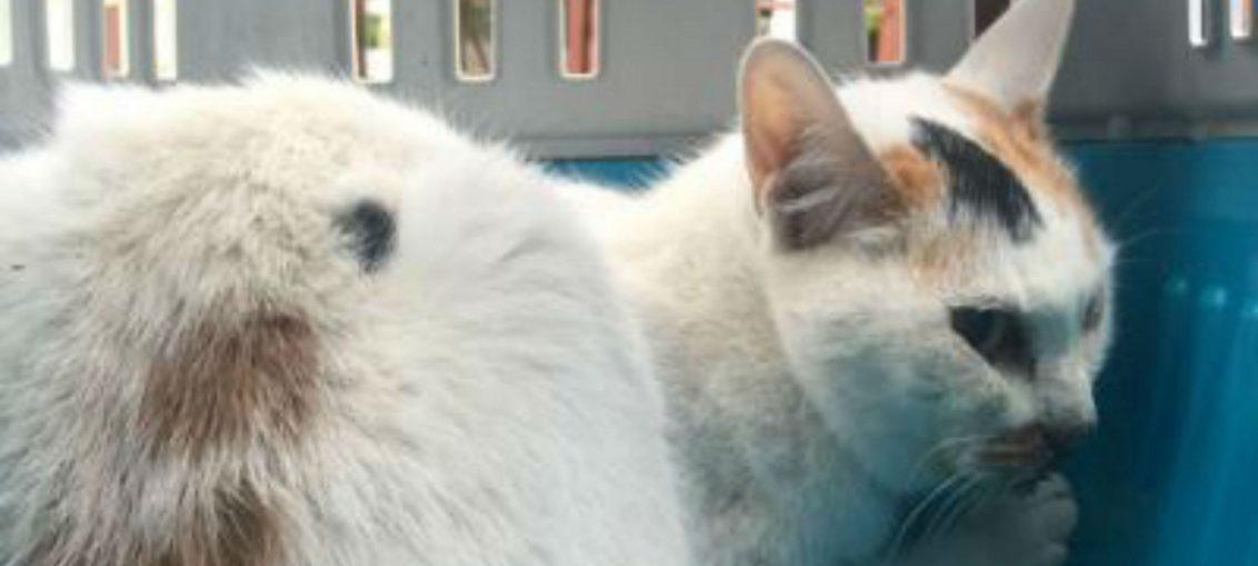 gatta carina ritrovata dopo 12 giorni sotto le macerie ad amatrice