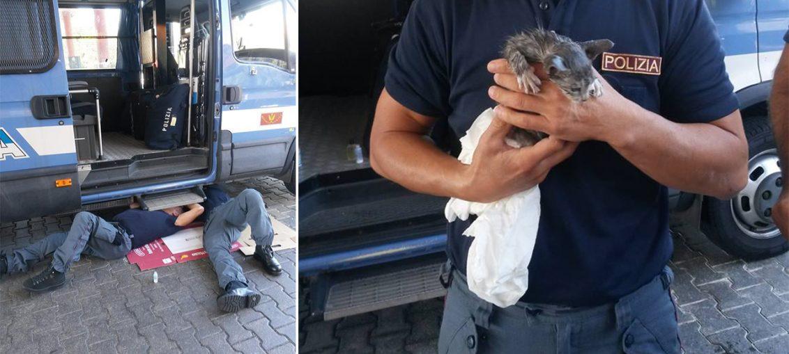 gatto trascinato vivo da macchina roma bologna