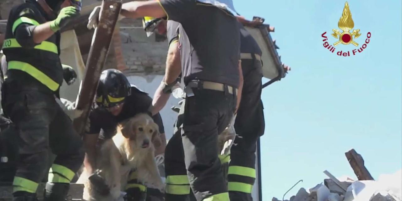 golden retriever vivo dopo 9 giorni dal sisma di amatrice
