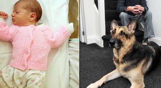 jade pastore tedesco salva neonata