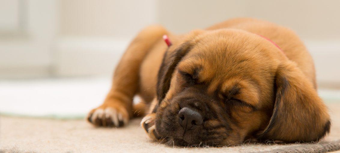 la posizione dei cani che dormono