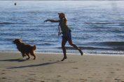 regolamento e legge cani in spiaggia