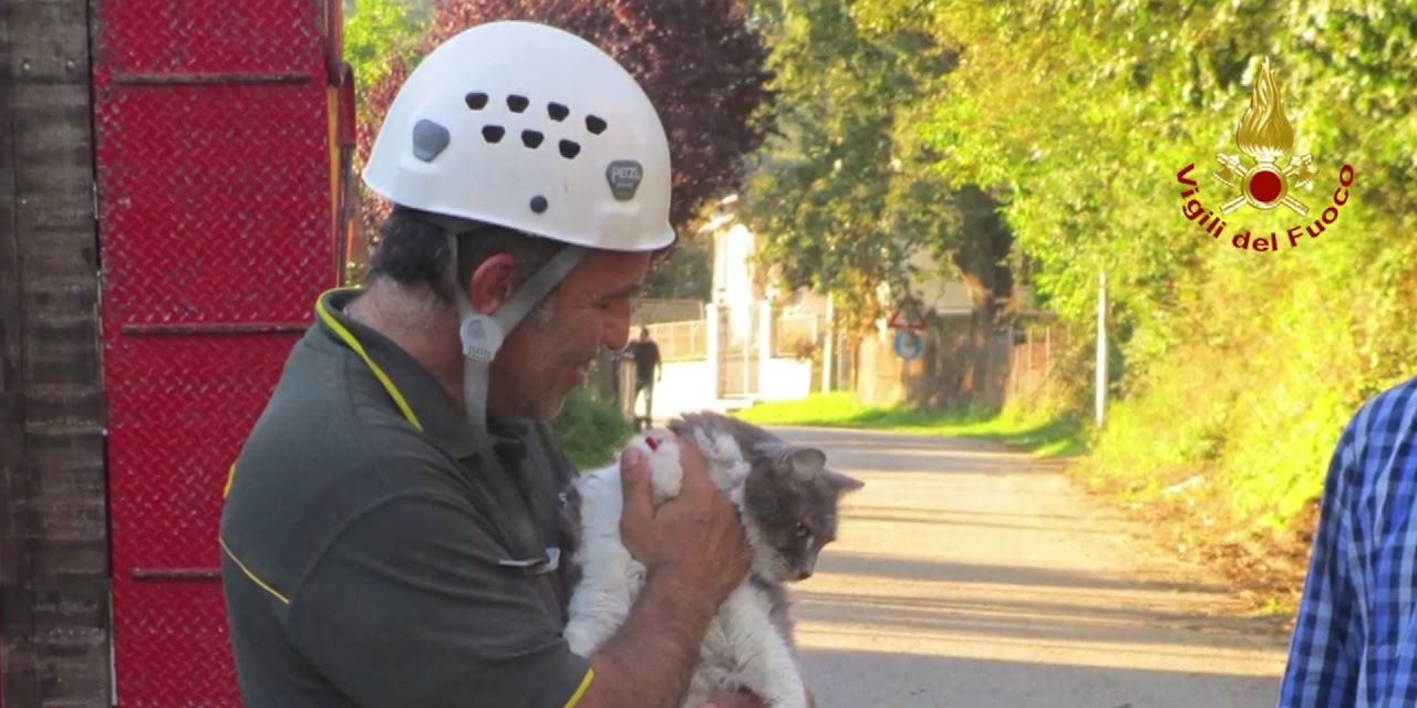 ritrovato gatto dopo 1 mese terremoto amatrice