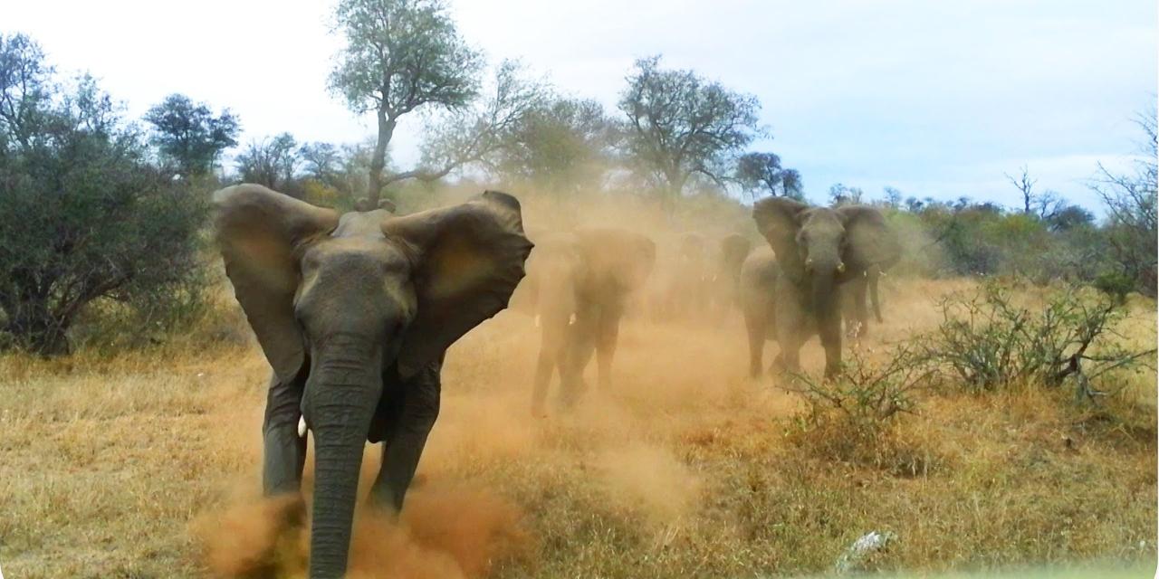 safari muore italiano attaccato da un elefante