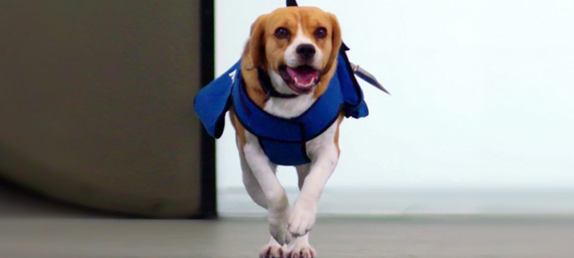 sherlock il cane detective aeroporto di amsterdam