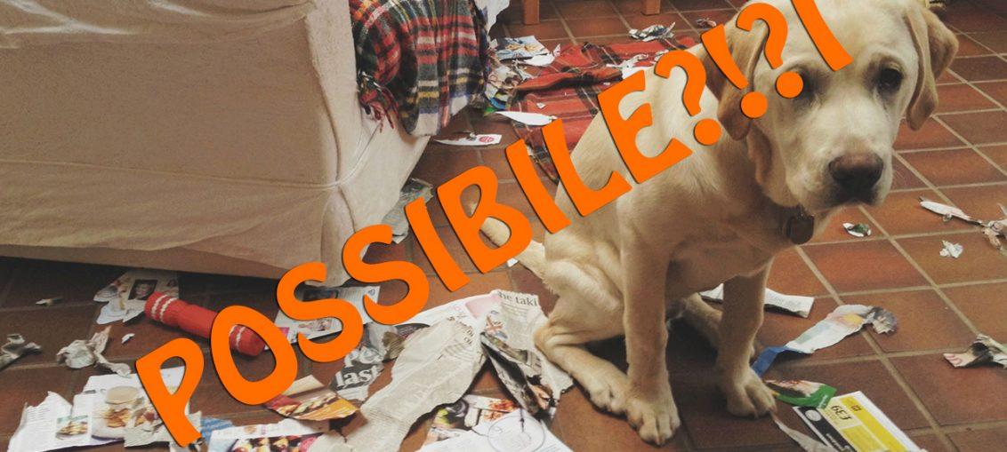 20-motivi-per-non-adottare-un-cane