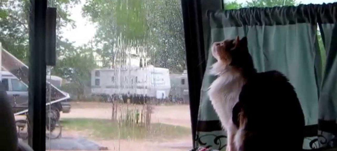 gli animali che prevedono la pioggia