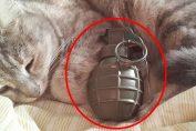 lisis dichiara guerra ai gatti
