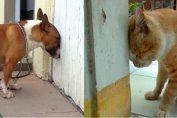 head pressing cane poggia la testa sul muro
