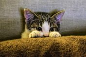killer dei gatti a bergamo