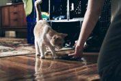 6 cibi da integrare nell'alimentazione dei gatti