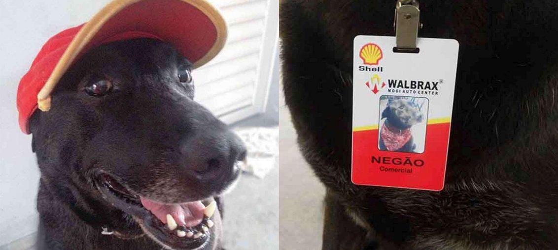 cane trova lavoro in un benzinaio la storia di negao
