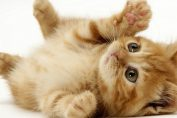 dieci cose sui gatti