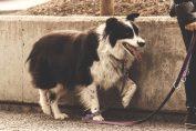 app per affittare un cane a pagamento