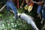 indonesia ragazzo ingoiato vivo da un serpente