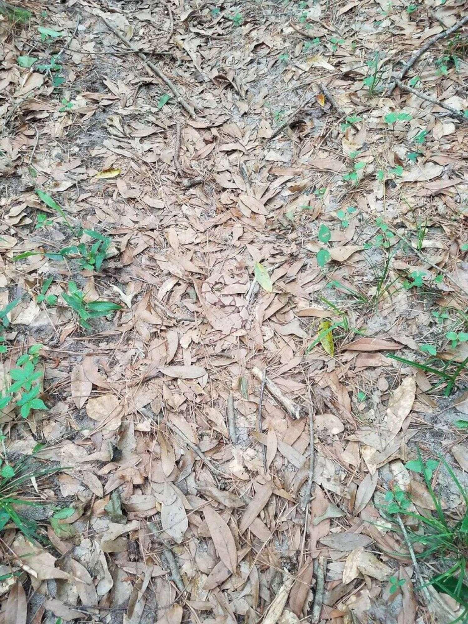 trova il serpente nascosto