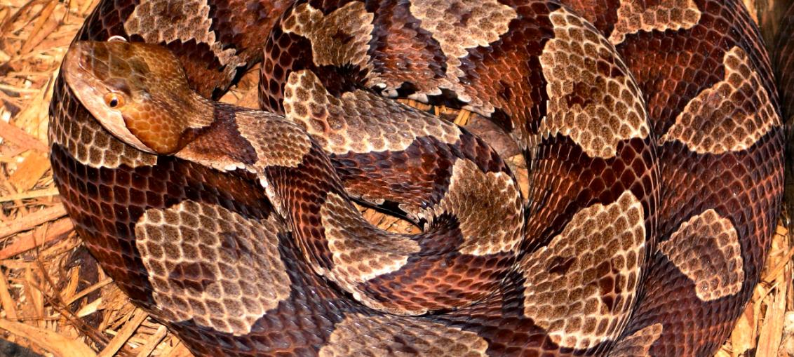 gioco trova il serpente