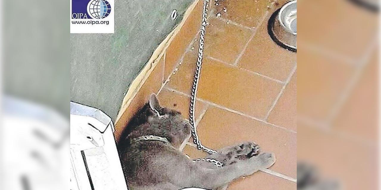 morgan gatto in catena reggio calabria