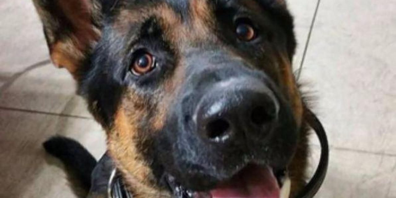 torino cane ucciso a martellate