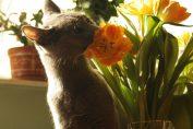 Allerta fiori tossici per i gatti
