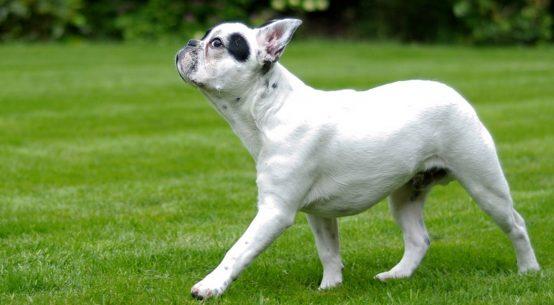 consigli per portare a spasso il cane