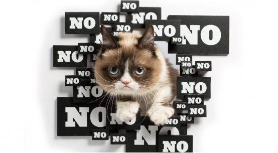 5 errori comuni che si fanno con i gatti